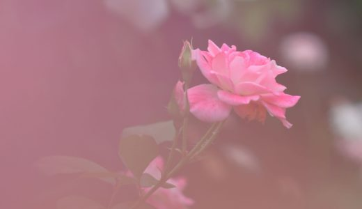 <「愛」のカタチ>No.432